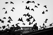 Halloween House Posters - Birds Over City - Featured 3 Poster by Alexander Senin