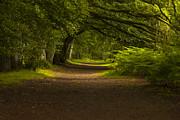 Alex Saunders - Birnam Woods Landscape