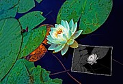 Water Lily Digital Art - Birth of an Image by Steve Harrington