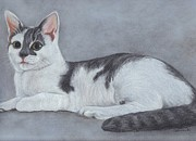 Cat Pastels - Biscuit by Carol Wisniewski