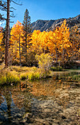 Autumn Trees Prints - Bishop Creek - Fall Print by Cat Connor