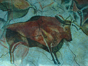 Cave Prints - Bison Buffalo Print by Unknown
