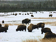 Winter Scene Prints - Bison Cows Browsing Print by Kae Cheatham