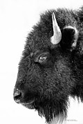 Dustin Abbott - Bison Formal Portrait