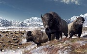 Grazing Snow Metal Prints - Bison Herd in Winter Metal Print by Daniel Eskridge