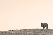 Sepia White Nature Landscapes Prints - Bison Hill  Print by James Bo Insogna