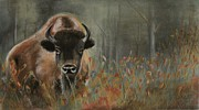 Buffalo Pastels Posters - Bison in Fall Poster by Holly Hornyan