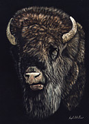 Bison Mixed Media Framed Prints - Bison Framed Print by Joseph Robertson