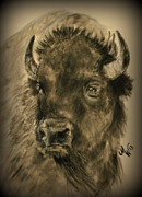 History Pastels Framed Prints - Bison  Framed Print by Michelle Wolff