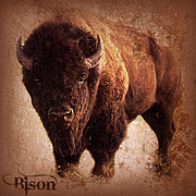 Bison Mixed Media Prints - Bison Print by Mindy Bench