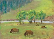 Ball Prints Pastels Framed Prints - Bison Framed Print by Naomi Ball