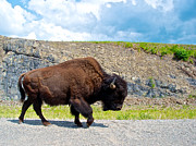 Bison Digital Art - Bison Plodding along on Alaska Highway-BC-Canada by Ruth Hager