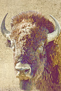 American Greetings Posters - Bison Portrait Poster by Iain S Byrne