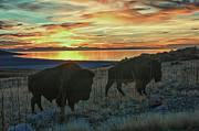 Bruce J Barker - Bison Sunset