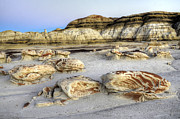 Unusual Landscape Posters - Bisti/De-Na-Zin Wilderness 8 Poster by Bob Christopher