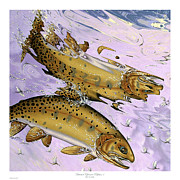 Cutthroat Trout Posters - Bitterroot Ephemera Reflection Poster by Philip Slagter