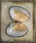 White Pearl Framed Prints - Bivalve Seashell Framed Print by Cindi Ressler
