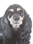Jill Jones - Black and Tan Spaniel