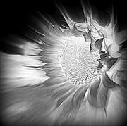 Sian Lindemann - Black and White Bliss