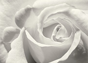 Sabrina L Ryan - Black and White Curves