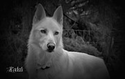 Shephard Prints - Black And White Dog Portrait Print by Tyra  OBryant