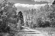 James BO  Insogna - Black and White High Elevation Rocky Mountain 4 Wheeling Dirt Ro