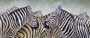 Zebra Paintings - Black and White in the unified field by Michal Shimoni