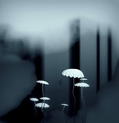 Black And White Mushrooms Print by GuoJun Pan