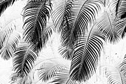 Frond Digital Art Prints - Black and White Palm Fronds Print by Karon Melillo DeVega