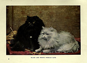 Persian Illustration Prints - Black and White Persian Cats Print by Unknown