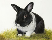 Rabbit Pastels Posters - Black and White Pet Rabbit Poster by Kate Sumners