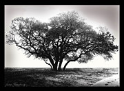 Black And White Photography Paintings - Black and white photography serenity  by Gina Femrite