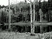 Sandee Gass - Black and White Pond