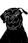 Chris Goulette - Black and White Pug