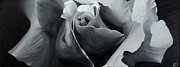 Black And White Roses Painting Originals - Black and White Rose by Sharon Von Ibsch