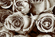 White Roses Originals - Black And White Roses by Tommy Hammarsten