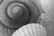 Carolyn Stagger Cokley - Black and White Shells2
