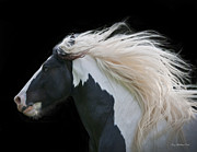 White Horses Photo Prints - Black and White Study III Print by Terry Kirkland Cook