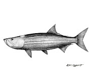 Tarpon Drawings Posters - Black and white tarpon Poster by Steve Ozment