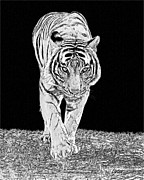 Asian Tiger Digital Art - Black-and-white Tiger by Larry Linton
