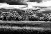 Storm Clouds Prints - Black and White Trees Print by Darryl Dalton