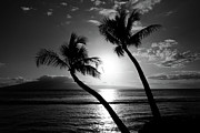 Pierre Leclerc Framed Prints - Black and White tropical Framed Print by Pierre Leclerc
