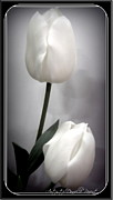 P Greeting Cards Greeting Cards Digital Art Prints - Black and White Tulips  Print by Danielle  Parent