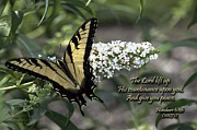 King James Prints - Black and Yellow Butterfly Print by John Hoffman