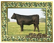 Black Angus Framed Prints - Black Angus Heifer Blank Christmas Greeting Card Framed Print by Olde Time  Mercantile