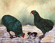 Hens And Chicks Paintings - Black Araucana SOP by Amanda  Stewart