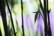 Abstract Purple Framed Prints - Black Bamboo Framed Print by Tim Gainey