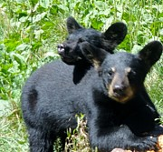 Jody Benolken - Black Bear Love