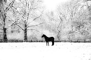 Wintery Digital Art Prints - Black Beauty Print by Bill Cannon