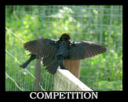 Blackbirds Posters - Black Birds Competition Poster by EricaMaxine  Price
